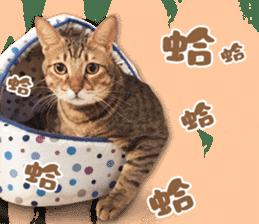 Angel's beauty cat-Bear&Wan sticker #15946388