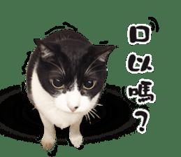 Angel's beauty cat-Bear&Wan sticker #15946389