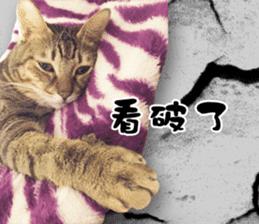 Angel's beauty cat-Bear&Wan sticker #15946390