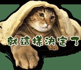 Angel's beauty cat-Bear&Wan sticker #15946391