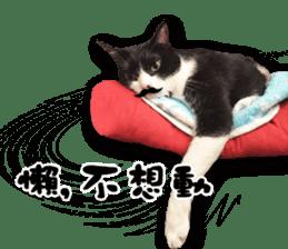 Angel's beauty cat-Bear&Wan sticker #15946392