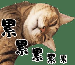 Angel's beauty cat-Bear&Wan sticker #15946393