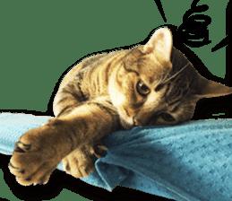 Angel's beauty cat-Bear&Wan sticker #15946395