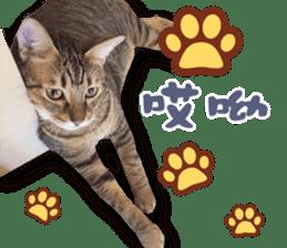 Angel's beauty cat-Bear&Wan sticker #15946398