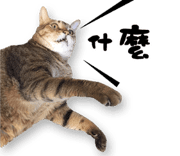 Angel's beauty cat-Bear&Wan sticker #15946402