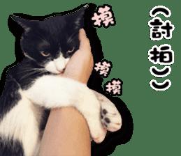 Angel's beauty cat-Bear&Wan sticker #15946403