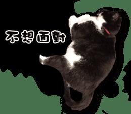 Angel's beauty cat-Bear&Wan sticker #15946405