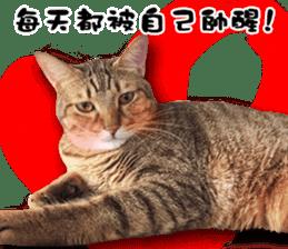 Angel's beauty cat-Bear&Wan sticker #15946406