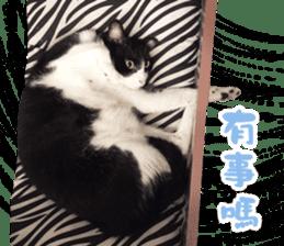 Angel's beauty cat-Bear&Wan sticker #15946407