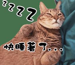 Angel's beauty cat-Bear&Wan sticker #15946409