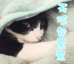Angel's beauty cat-Bear&Wan sticker #15946410