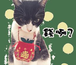 Angel's beauty cat-Bear&Wan sticker #15946411