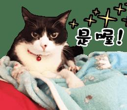Angel's beauty cat-Bear&Wan sticker #15946415