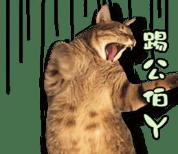 Angel's beauty cat-Bear&Wan sticker #15946417
