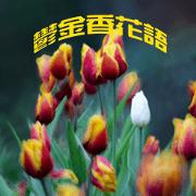 สติ๊กเกอร์ไลน์ Tulip flower language