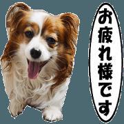 สติ๊กเกอร์ไลน์ active dog papy-3