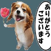 สติ๊กเกอร์ไลน์ active dog rabbit-3