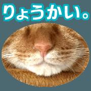 สติ๊กเกอร์ไลน์ Real cat ! MIKAGE & CHAR Sticker 2