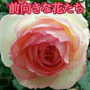 สติ๊กเกอร์ไลน์ Prospective Flowers