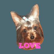 สติ๊กเกอร์ไลน์ lovery dogs