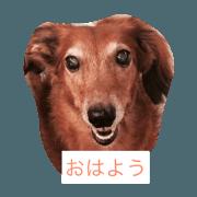 สติ๊กเกอร์ไลน์ Dog's word
