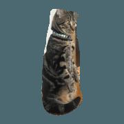 สติ๊กเกอร์ไลน์ our cat SORA