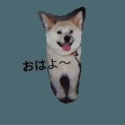 สติ๊กเกอร์ไลน์ my fukumukuro