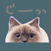 สติ๊กเกอร์ไลน์ dog and cat stamp
