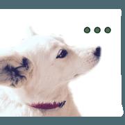 สติ๊กเกอร์ไลน์ 3 dogs, friends