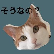 สติ๊กเกอร์ไลน์ brown white cat