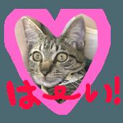 สติ๊กเกอร์ไลน์ uema cat