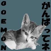 สติ๊กเกอร์ไลน์ Lovely cat Goemon 3rd with friends.