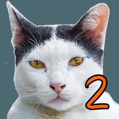 แมวสวนลุม2 (ม้าเต่อ)