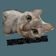 สติ๊กเกอร์ไลน์ kito of a cat