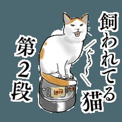 飼われてる猫 第2段