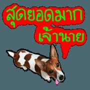 สติ๊กเกอร์ไลน์ ปากสุนัข