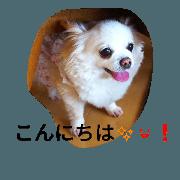สติ๊กเกอร์ไลน์ Chihuahua Rin and Hina
