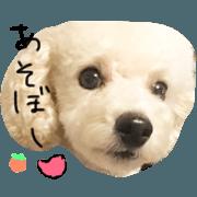 สติ๊กเกอร์ไลน์ LOVE toypoodle HASSAKU