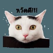 สติ๊กเกอร์ไลน์ ทาสแมว V.1