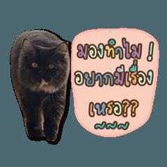 สติ๊กเกอร์ไลน์ หนวดแมว V.1
