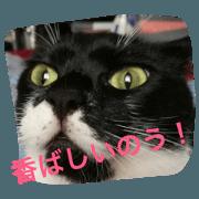 สติ๊กเกอร์ไลน์ Handsome cat is OMAME