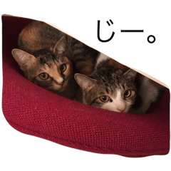 สติ๊กเกอร์ไลน์ Silly kitty sisters