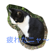 สติ๊กเกอร์ไลน์ love cat name is kuro
