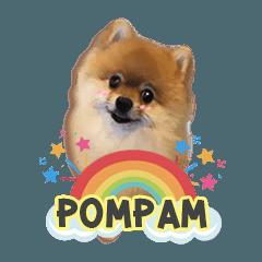 Pompam Pomeranian