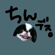 สติ๊กเกอร์ไลน์ I'm Kai. Japanese Chin STAMP.