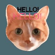 สติ๊กเกอร์ไลน์ CATs!LOVE