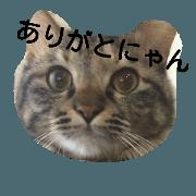 สติ๊กเกอร์ไลน์ mofu mofu cat