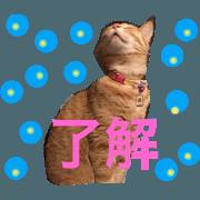 สติ๊กเกอร์ไลน์ love.cats