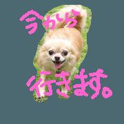สติ๊กเกอร์ไลน์ natsuaru