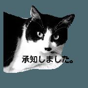 สติ๊กเกอร์ไลน์ the cat says...